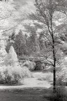Arboretum View No.2, Washington Park Arboretum - Seattle, Washington (9645 bytes) www.jeffkrewson.com