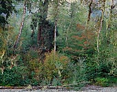 River Bank, South Fork Stillaguamish - North Cascade Mountains, Washington (10993 bytes) www.jeffkrewson.com