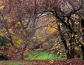 An Autumn, Washington Park Arboretum - Seattle, Washington (11464 bytes) www.jeffkrewson.com
