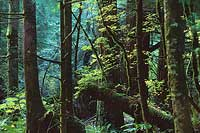 Index River Forest - North Cascade Mountains, Washington (11824 bytes)