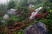 Rocks and Flowers, Minotaur Lake - North Cascade Mountains, Washington (12412 bytes) www.jeffkrewson.com