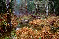 Winter Marsh, Mountain Loop Highway - North Cascade Mountains, Washington (13636 bytes) www.jeffkrewson.com