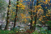 Index River, Index-Gallena Road - North Cascade Mountains, Washington (15032 bytes) www.jeffkrewson.com